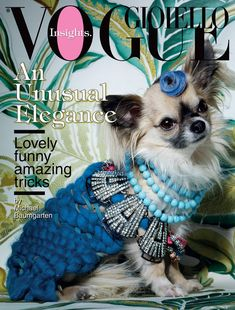 aye chihuahua, anim, dog dresses, doggi lover, pet, dog vogue, baby dogs, puppi, chihuahuas dogs