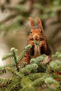 Beatrix Potter Squirrel Nutkin