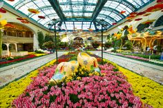 Visit the Bellagio Conservatory for amazing floral displays and a touch of Spring!