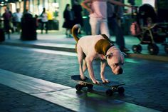Dog Riding a Skateboard by Kevin McShane