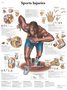 Sports Physical Therapy and Common Injuries. Pinned by SOS Inc. Resources @SOS Inc. Resources http://pinterest.com/sostherapy.