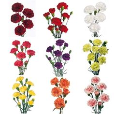 Mixed solid mini carnations: $190 for 25 bunches (250 stems)