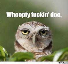 Unimpressed owl: grumpy cat's spirit animal. It should be whoopty fuckin' hoo, but I won't nitpick.