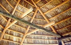 The roof of a Chickee (inside view). The Seminole Tribe of Florida