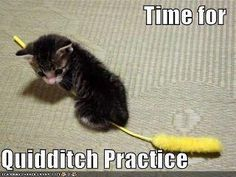 Time for Quidditch Practice! animal pics, cats, harri potter, hogwart, kittens, quidditch, harry potter humor, harry potter funnies, kitty