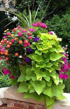 Spikes, pink geranium, lantana, violet and magenta petunias, sweet potato vine.