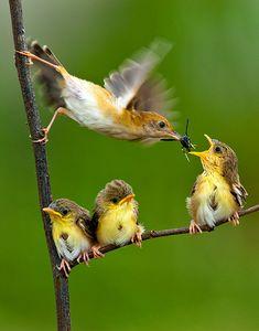 Feeding time! #birds