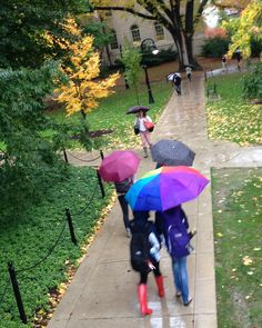 10/15/14 -- One of those rainy days that you really don't mind, because, you know, it's not snow! Colorful umbrellas brighten this crosswalk from McAllister Building to Old Main with some golden autumn leaves to add another piece of color, too. Rubber boots are fun!
