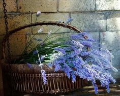 ~ lavender in a basket ~