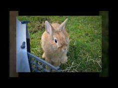 Rabbit Hutches from Matts Homes  Outdoor Designs