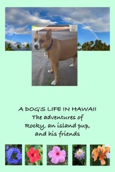 Adorable ebook make