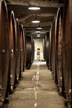Korbel wineries, California.