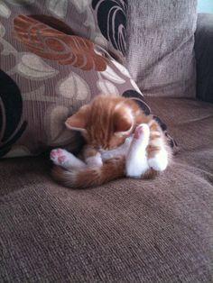 Wee sleepy kitty.