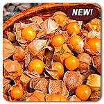 Organic Goldie Ground Cherry