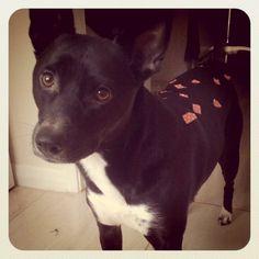 washi tape fawn-dog