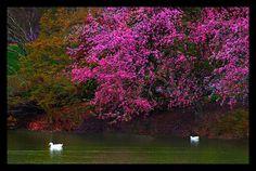 Pullen Park, #Raleigh, North Carolina