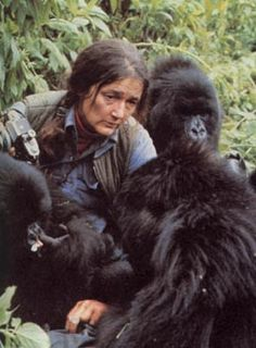 Dian Fossey pioneered studies with gorillas in Africa, tryed to stop the poaching of the them.  In 1967 Fossey founded the Karisoke Research Center, located deep within the Virunga Mountains, Rwanda.  wrote Gorillas in the Mist.  Found murdered w/a machete(r.i.p)