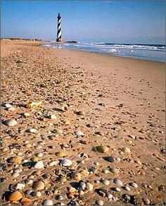 shell, capehattera, outer bank, obx, hattera lighthous, beach weddings, place, cape hattera, north carolina