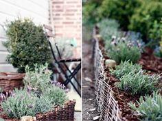 isi, grape vines, old baskets, garden accessories, du passé, passé récent, gardens, garden edging, garden beds