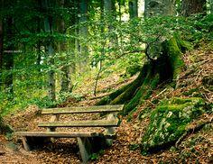 Selva Negra, rincones llenos de magia en Alemania   #vacaciones #buscounchollo #selvanegra #alemania