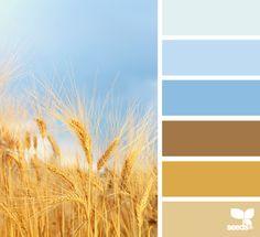 Wheatfield hues