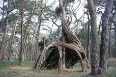 stun tree, tree houses, treehous, pine, kid