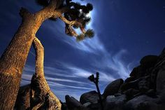 Joshua Tree National Park and Desert Hot Springs  Joshua Tree and environs offer camping, hiking, unusual sites (the famed Integratron), hotels, restaurants, watering holes and spas, where you can take a well-deserved soak.