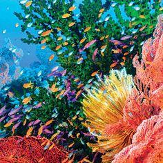 A vibrant coral reef near Viti Levu, Fiji | CoastalLiving.com