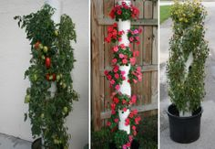 Small garden? PVC pipe vertical garden.  Set in the ground or in a large pot. Cut holes, fill pipe with soil, plant and enjoy. garden ideas, planter, patio gardening, outdoor gardens, small gardens, pvc pipes, flower tower, container gardening, garden pots