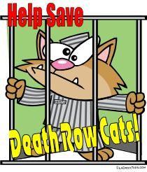 row cat, cat shirt