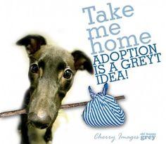 adopt a grey
