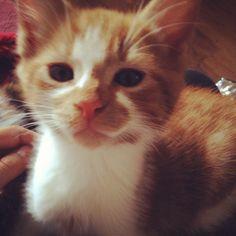 . met, kitten, cat, london