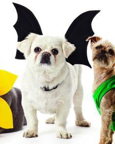DIY Bat Wings costume for dogs. #AETN #BeMore