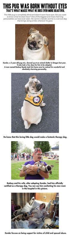 Quite possibly the greatest service dog ever…Absolutely adorable in every single way!