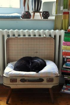cat bed in a suitcase.
