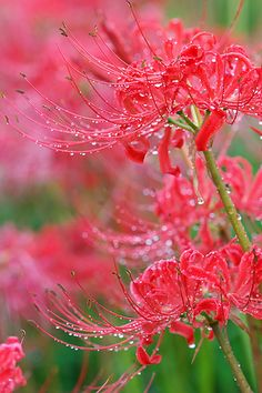 Rain Drenched Flowers - So Pretty