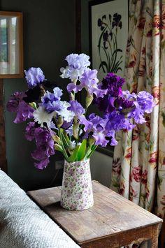 Irises..
