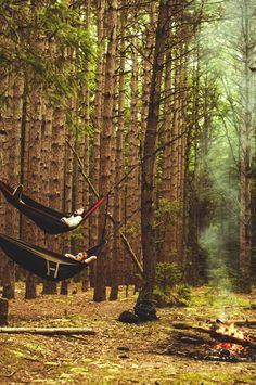 forests, summer picnic, animals, nature, bunk beds, camping, hammocks, trees, place