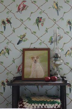cottag vignett, bird wallpap, room idea, hous idea, cottages