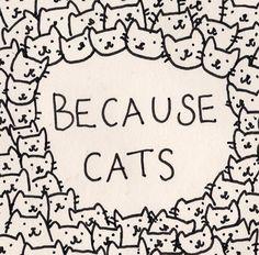 cats, crazi cat, anim, stuff, meow, kitti, quot, cat ladi, thing