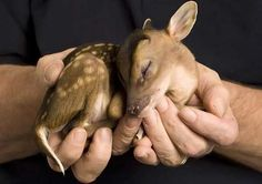 Holding a baby deer