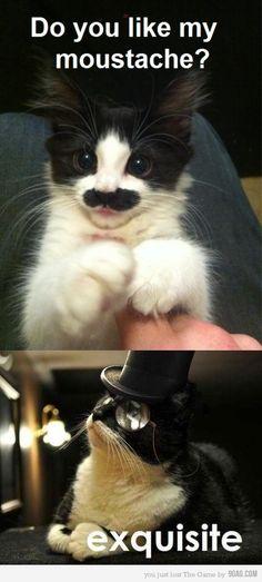 moustache kitty!!! XD