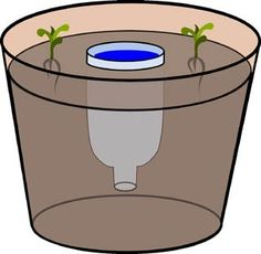 I need to remember this for next year when planting my patio pots!  Self watering using soda bottle