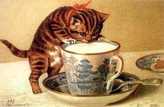 gato desayunando