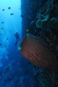 Morotai Island, North Maluku, Indonesia (underwater)