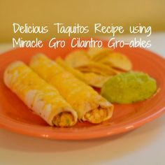Delicious Taquitos Recipe using Miracle Gro Cilantro Gro-ables! #groables
