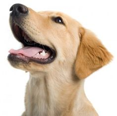 Why Dog Dental Care Is So Important - Dog Pet Care Corner - PetSolutions