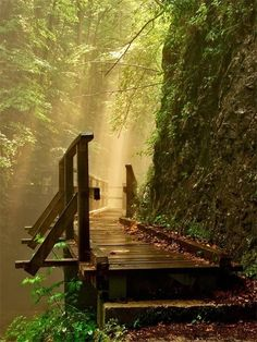 Sun spray falling on the path of mystery forests, pathway, the bridge, shower, walkway, bridges, sunlight, place, hiking