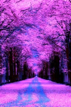 Purple Covered Road