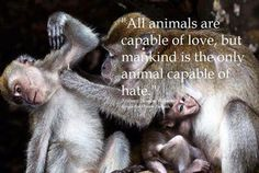 Animal Quotes, Animal Rights & Religions's #love